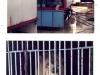 Raubkatzen in ihren an Deck gelaschten Käfigen